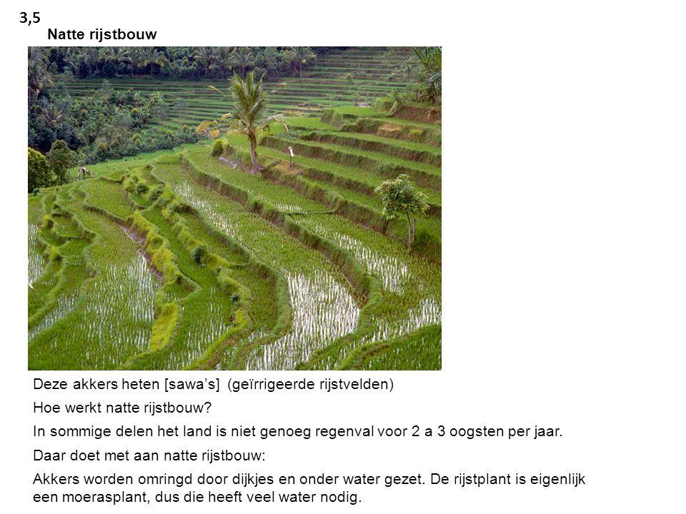 3,5 Natte rijstbouw. Deze akkers heten [sawa's] (geïrrigeerde rijstvelden) Hoe werkt natte rijstbouw